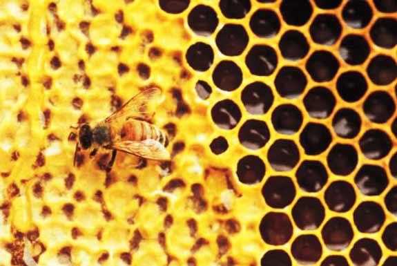 <b>Jantung Lebah Ratu</b>: Kupas-kupaslah, Pecahkanlah, Pecahkanlah…